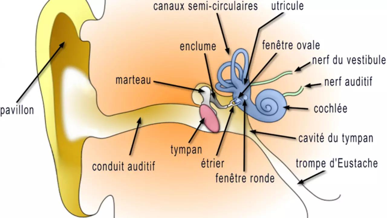 shéma/Acouphènes pulsatiles cervicales