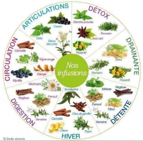 bienfaits infusions plantes