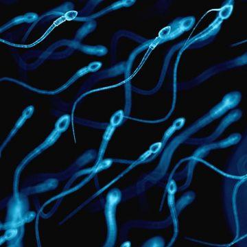 Fertilité homme : quelles sont les consignes à suivre ?
